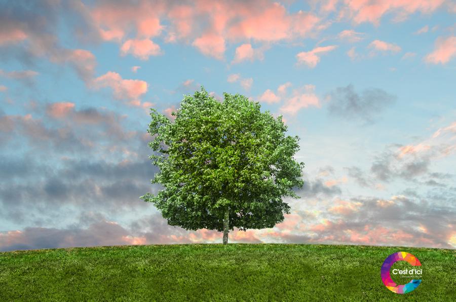 L'impact écologique du web